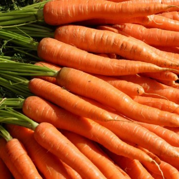 Carrots - 16/3# cello bags