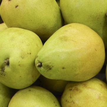 Pears - 120/5# bags in TW bins