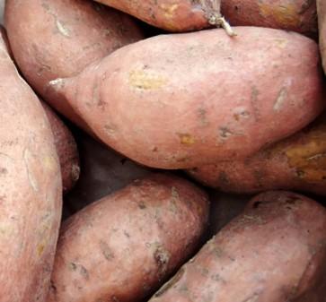 Sweet Potatoes - 1400# Bulk Bins