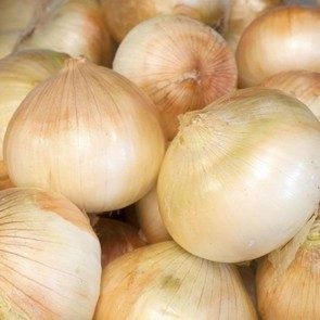 Onions - 800# (Jumbo Sized) TW BINS