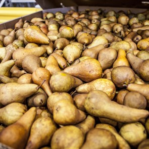Pears - 650# Bulk Bins