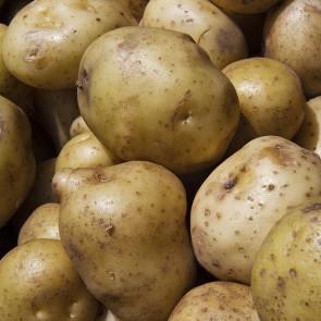 Potatoes - 50# bags