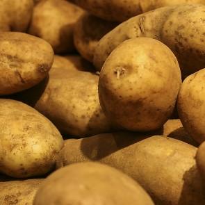 Potatoes - 50# Mesh bag