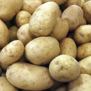 Potatoes - 50# Sacks