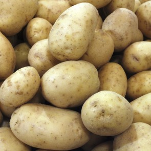 Potatoes 2,000# Tote bins from Wisconsin